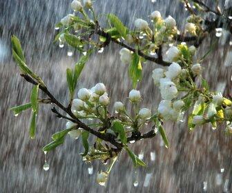 Синоптики прогнозируют дождливый апрель в Воронеже и теплое лето