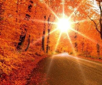 Синоптики: сухая погода до 8 градусов тепла ожидается в Москве 7 ноября