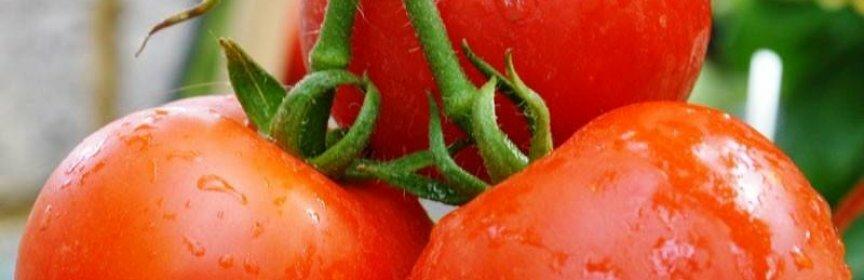 10 ранних сортов помидоров для Сибири