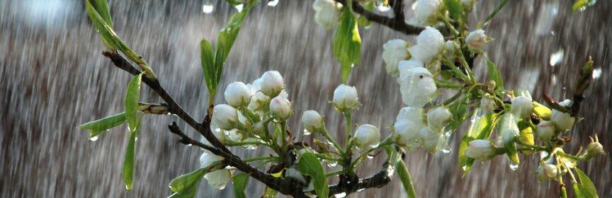 Синоптики: на новой рабочей неделе на Кубани испортится погода