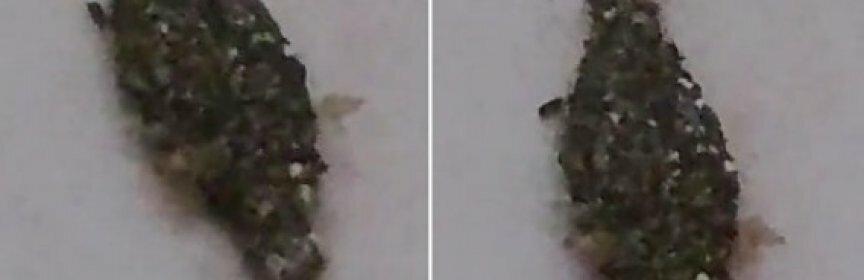 Запечатленное на видео существо, может оказаться пришельцем