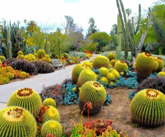 8 экзотических растений для сада