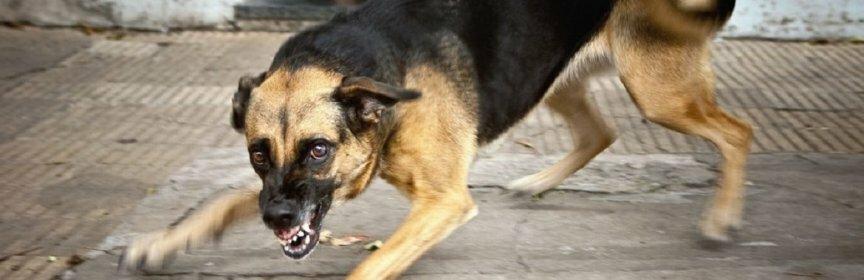 Ставрополь: агрессивную бродячую собаку поймали спасатели ПАСС СК