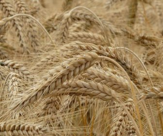 Ростовская область в 2020 году — лидер по экспортированию продукции сельскохозяйственной отрасли